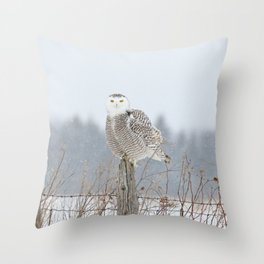 Snow falling on Miss Snowy Throw Pillow