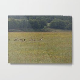 Canadian Geese in an English Meadow Metal Print