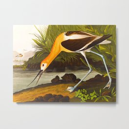 American Avocet Vintage Bird Illustration Metal Print