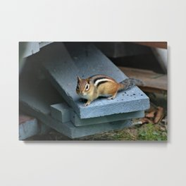 Chip on the Block: Adirondack Chipmunk Metal Print
