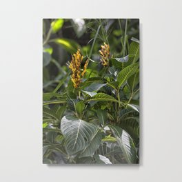 Yellow flower in the rain forest Metal Print
