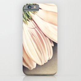 Sweetheart Pink Gerber Gerbera Daisy iPhone Case