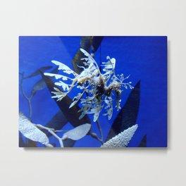 Sea horse, Sea dragons  Metal Print