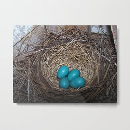 Robin eggs in nest Metal Print