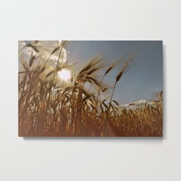 Cereals Cornfield Metal Print