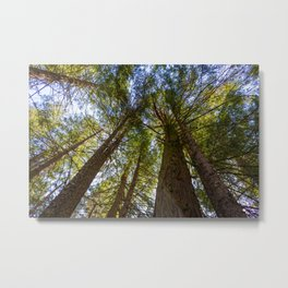 Into the Canopy Metal Print