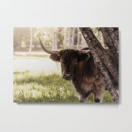 Peaking Beauty Metal Print