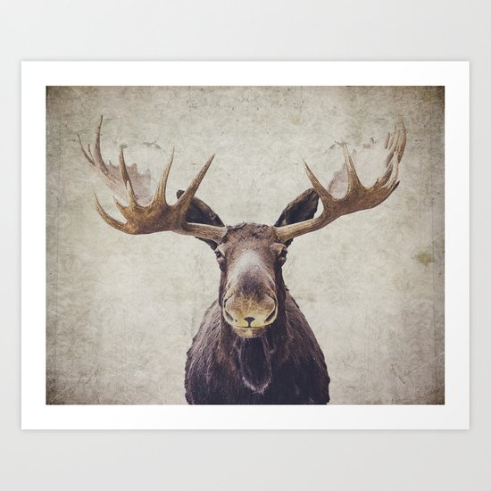 Moose by retrolovephotography
