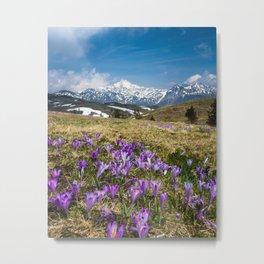 Mountains and crocus flowers on Velika Planina, Slovenia Metal Print