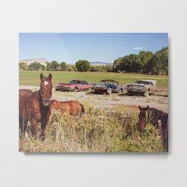 So Many Horses // Beautiful Wildhorses and Three Rusty Cars Metal Print