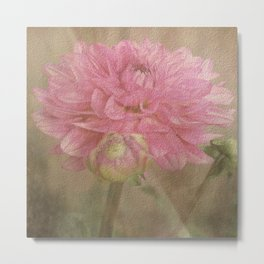 Soft Graceful Pink Painted Dahlia Metal Print