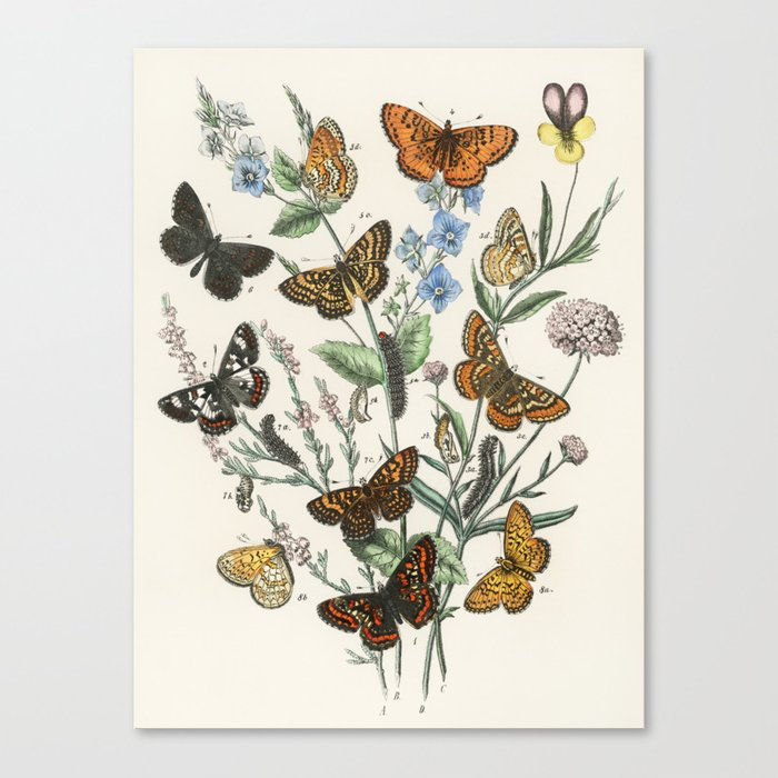 Vintage Scientific Illustration Butterfly Botanical Floral