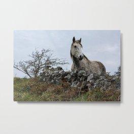 Grey Irish Horse in the Wilderness in Ireland Metal Print