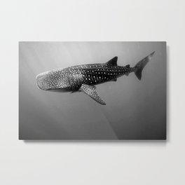 Big Fish, B & W Metal Print