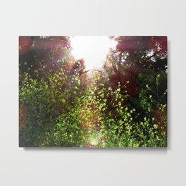 Sunlit Floral Path Metal Print