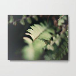 Blurred Close Up Of Fern Leaf Metal Print