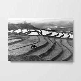 Wild Horses on the Rice Terraces of Northern Vietnam Metal Print