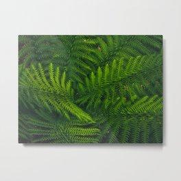 The Fernest of Ferns Metal Print