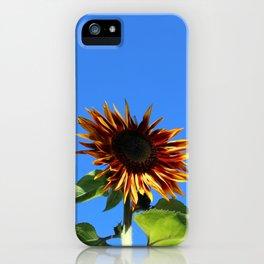 Sunflower, Hansville, WA iPhone Case