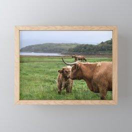Highland Cow - Mother & Calf Framed Mini Art Print