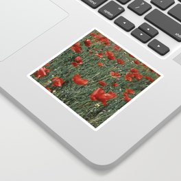 Meadow of red poppies Sticker