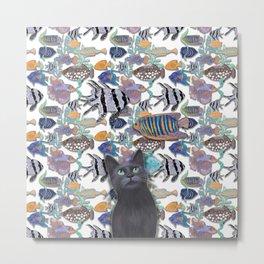Black cat looking at an exotic fish tank Metal Print
