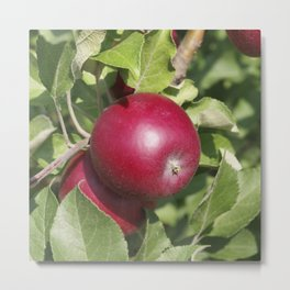 Apple Almost Ready Metal Print