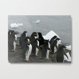 Adelie Penguins 3, Antarctica 2006 Metal Print