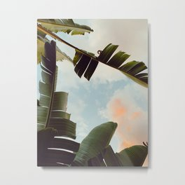 tropical summer evening Metal Print