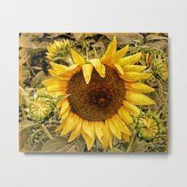 Backyard Summer Sunflowers Metal Print