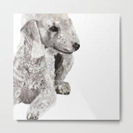 Bedlingham Terrier Metal Print
