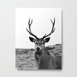 Stag Metal Print
