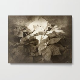 Mixed color Poinsettias 3 Antiqued Metal Print