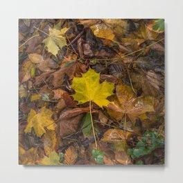 Yellow Maple Leaf Metal Print