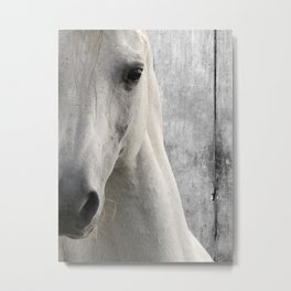 Horse Photography White Horse Close Up Modern Home Decor Gift for the Equestrian Art A833 Metal Print