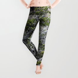 Windswept Woodland Leggings