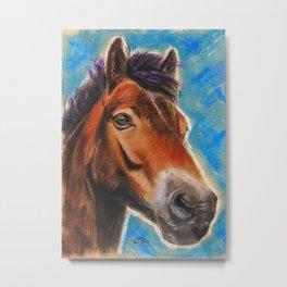 Exmoor Pony In Blue Metal Print
