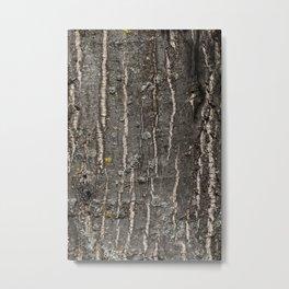 bark of old oak Metal Print