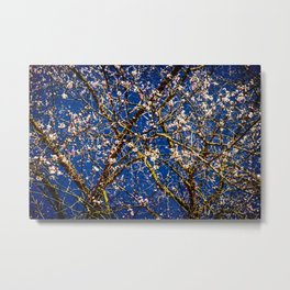 Japanese Apricot Tree Against The Dark Blue Background Metal Print