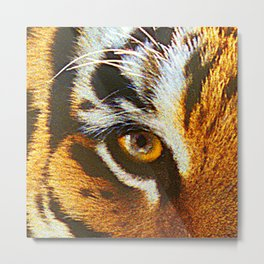 Real Tiger Eye! Up Close and Very Personal Metal Print