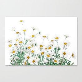 white margaret daisy horizontal watercolor painting Canvas Print
