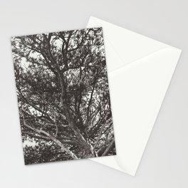 Growth | Estes Park, Colorado Stationery Cards