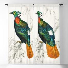 Bird Illustration Blackout Curtain