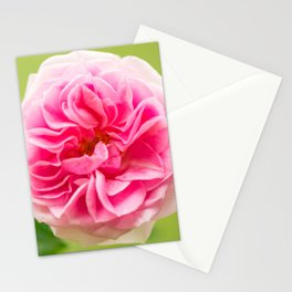 Pink Rose On A Natural Green Background #decor #society6 #buyart Stationery Cards