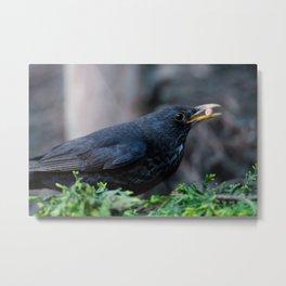 Blackbird Got The Food Metal Print