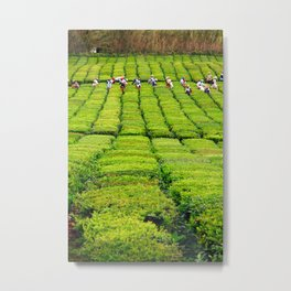 Porto Formoso tea gardens Metal Print