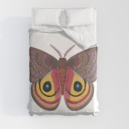 io moth (Automeris io) female specimen 1 Comforters