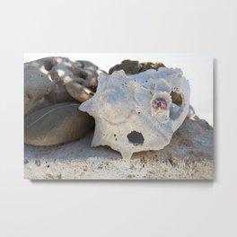Elemental Seashell  Metal Print