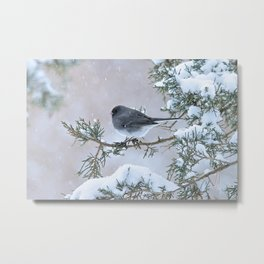 Snow Day Junco Metal Print