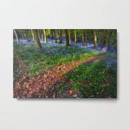 Bluebell Wood in Margam Metal Print